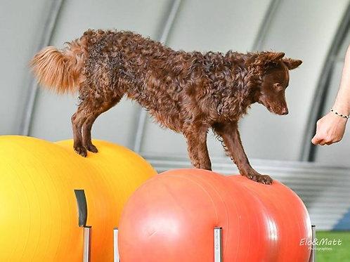 Séance fitness 45 minutes pour 1 chien
