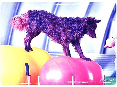 Séance fitness 1h30  pour 3 à 4 chiens