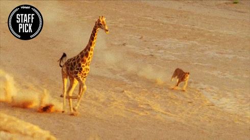 How Nature Documentaries Are Fake