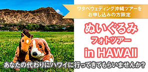 592px_Okinawa_Nuigurumi_bnr.jpg