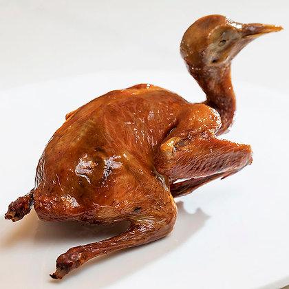 BB乳鴿 // 隻