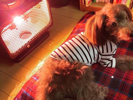 末期癌の犬もリラックス