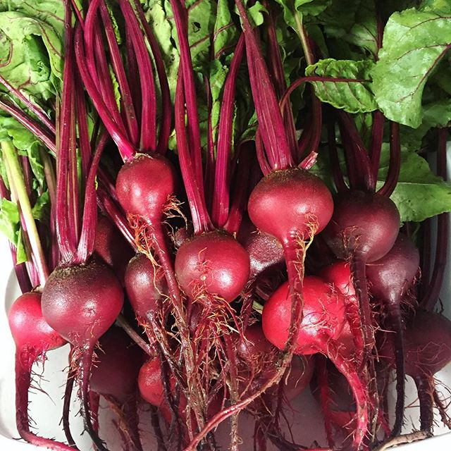 Beets beets. Like vegetable candy! So yummy