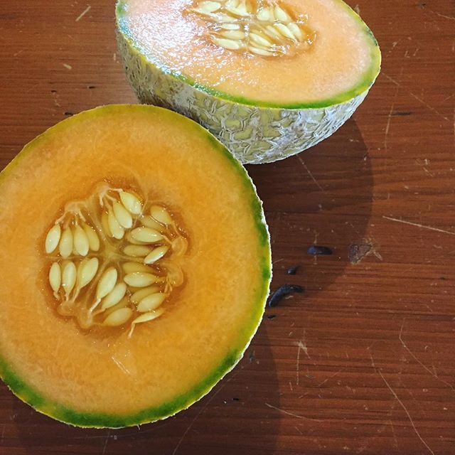 So it happened folks! I became a proud cantaloupe mother. . .and then ate it! Delicious juicy cantal