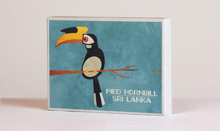 Pied Hornbill - Box Frame