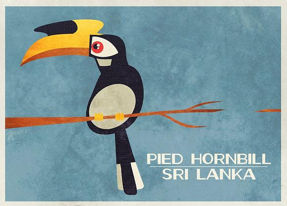 Pied Hornbill - Poster