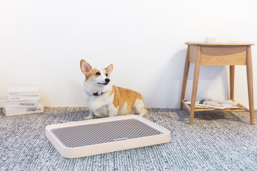 PETKIT PURA DOG PEE PAD TRAY