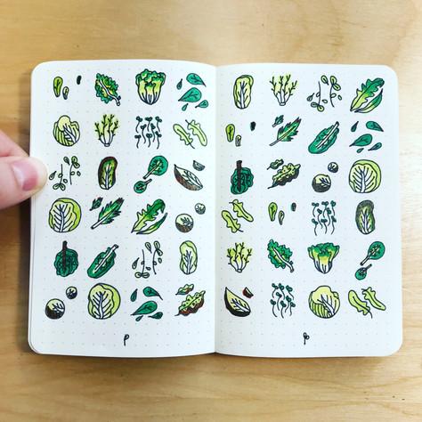 word salad sketch.jpg