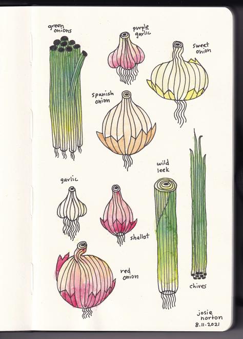 onions copy.png
