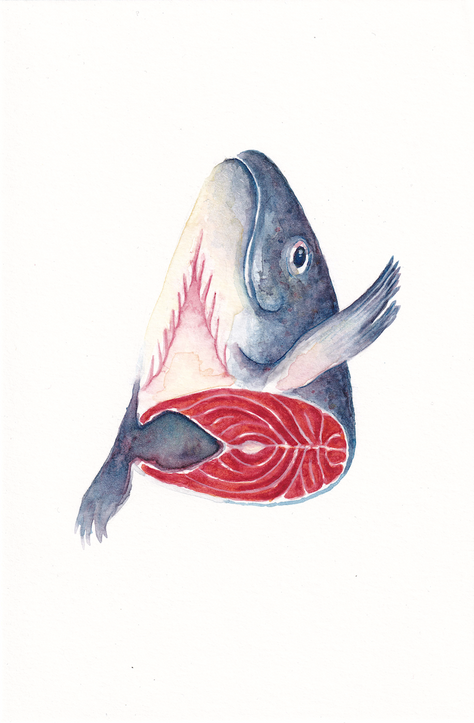salmonhead_portfolio_144dpi.png