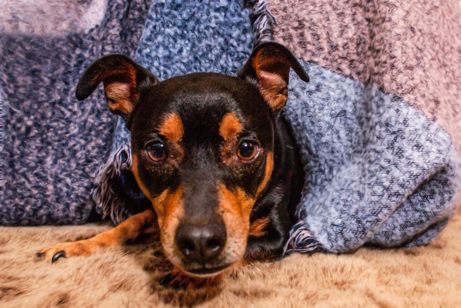 Hundetherapie