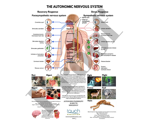 Autonomic Flexibility Poster
