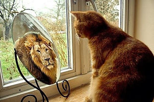 lion in mirror.jpeg