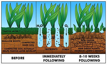 Core Aerating puts holes in your lawn to help water and nutrients to go even deeper into the soil. Core Aerating not only puts holes in your lawn, it pulls out a core of soil that in time will dissolve and act as an overdressing which is the perfect time to put down more grass seed (overseeding) to grow more grass for a thicker, greener lawn. Lawn Mowing Service Lawn Service Lawn Care Service West Henrietta Lawn Mowing Service Lawn Service Lawn Cutting Service Grass Cutting Service Lawn Care Service West Henrietta Yard Mowing Service Yard Service Yard Cutting Service Lawn Care Service West Henrietta Lawn Maintenance Service Landscaper Landscaping Henrietta, NY lawn care west henrietta, snow plowing west henrietta, ny, lawn mowing, lawn rolling, lawn aerating, core aerating, lawn dethatching, lawn mowing west henrietta, ny, lawn aeration west henrietta, ny, grass cutting henrietta, ny, fertilization, aerating and overseeding, weekly lawn mowing, snow removal 14623, snowplowing 14586