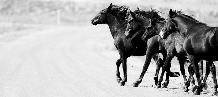 Wild Horses 2020
