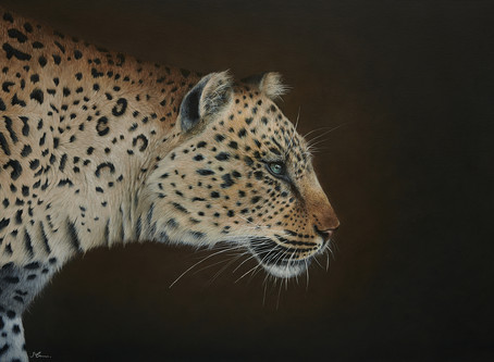 Limited Edition Leopard Giclée Prints Available NOW!
