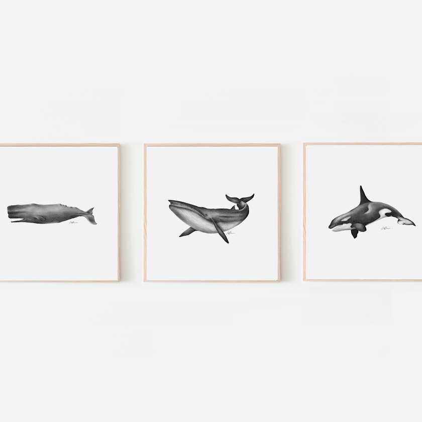 Whale Prints by Sophie Green