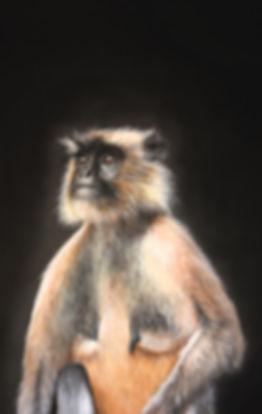 Contemplation, Langur