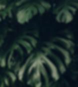 Screen Shot 2020-04-24 at 1.19.38 PM.png