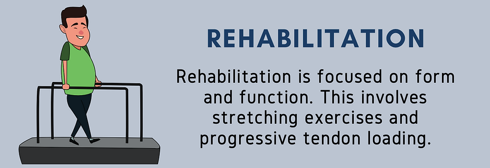 Rehabilitation is focused on form and function. This involves stretching exercises and progressive tendon loading.