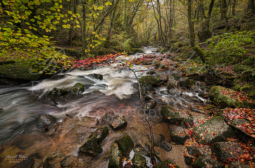 Golitha falls in autumn
