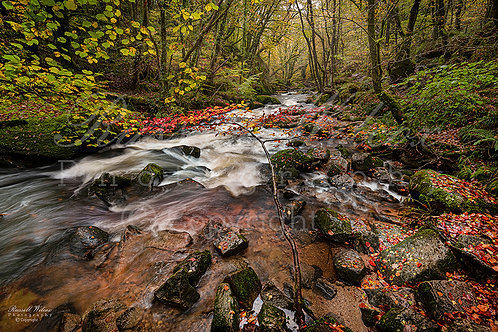 Golitha Falls in autumn