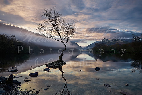 Lone tree Llanberis