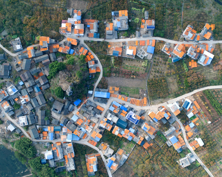 Persimmon-Harvest-2nd-place-Story-Professional-2017-SkyPixel-Photo-of-the-Year