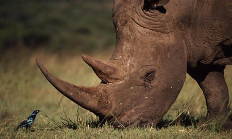 stop rhino poaching in africa