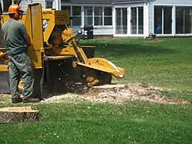 Tree stump removal - Pennsylvania, Maryland
