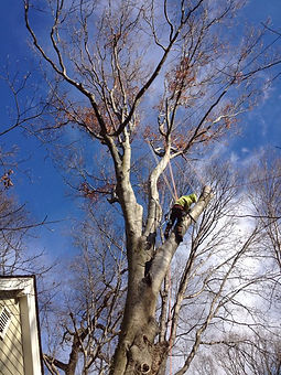 Tree Specialists - Pennsylvania, Maryland