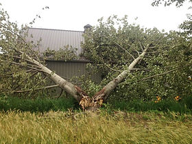 Emergency Tree Services - Pennsylvania, Maryland