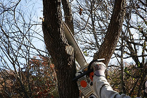 Tree trimming services - PA, MD