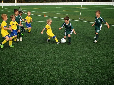 Dingoes U6 in action against the Forest Killarney Seals ⚽️💙💛