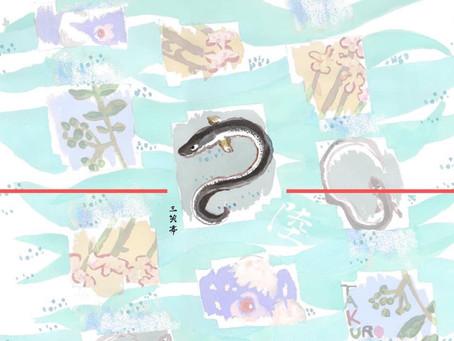三笑亭さんアナゴののし紙イラスト