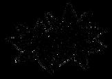 Logo Anis.png