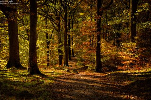 Grasmere Woods