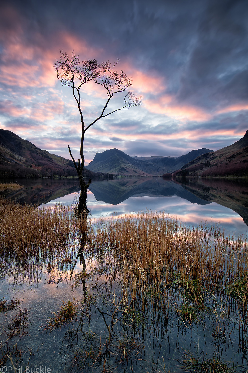 Buttermere Lone Tree