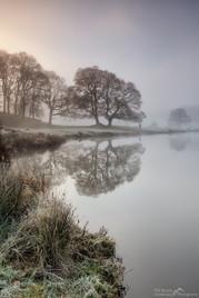 River Brathay Trees