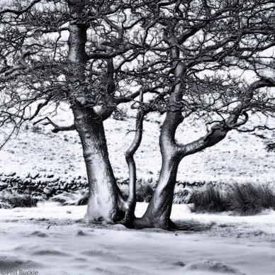 Snow clad