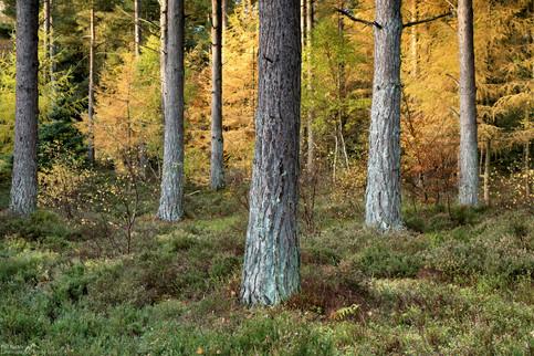 Armathwaite Pines 2.jpg