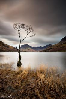 Buttermere Lone Tree Dawn