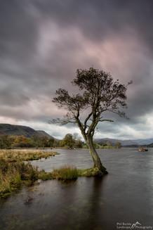 Gale Bay Lone Tree