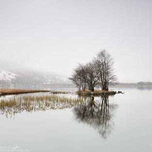 Copse Reflections.jpg