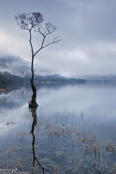 Buttermere Lone Tree Dawn.jpg