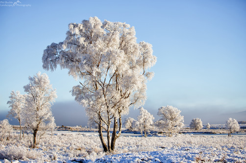 Rannoch Trees Winters Coat
