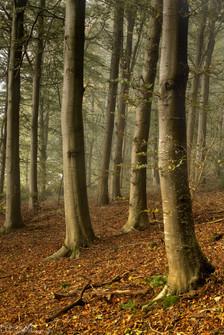 Dalemain Mist.jpg