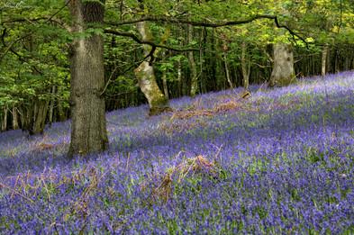 Flakebridge Wood.jpg