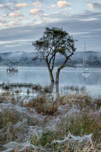 Gale Bay Tree.jpg