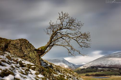 Low Rigg Lone Tree.jpg